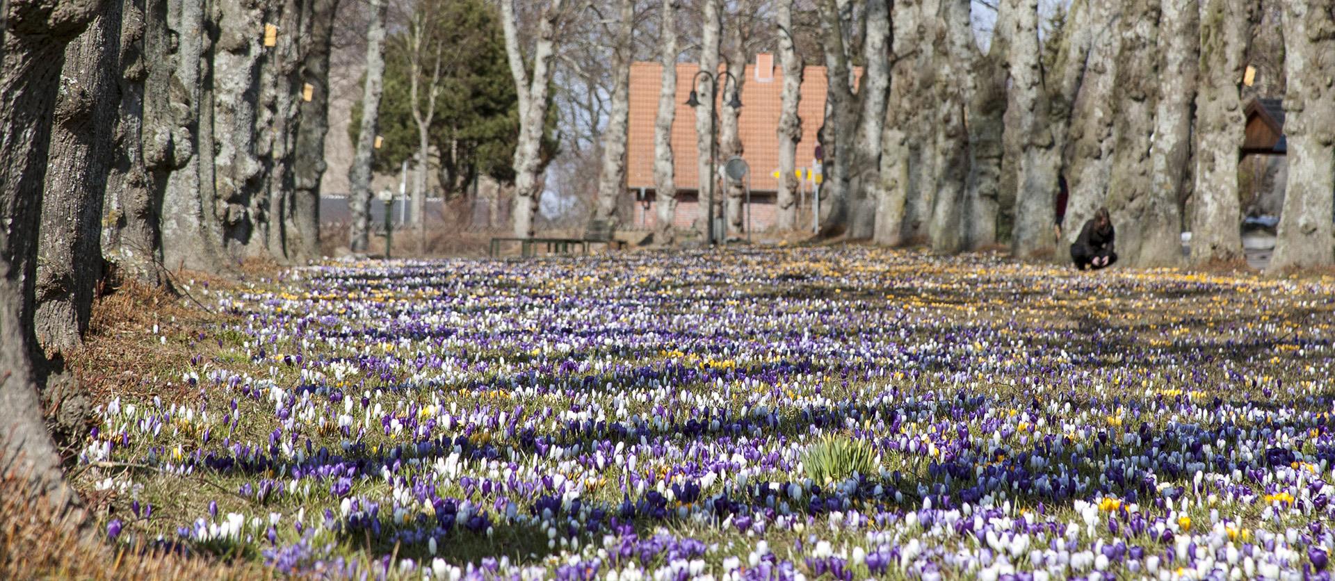 Thumbnail for the post titled: Barsbek tritt Gesellschaft zur Erhaltung historischer Gärten in Schleswig-Holstein bei